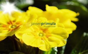 Startseite des Internetauftritts von Jansen Primula
